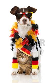Hund und Katze im Fußballfieber
