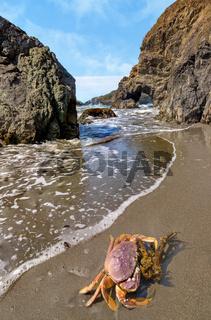 Crab on a Rocky Beach