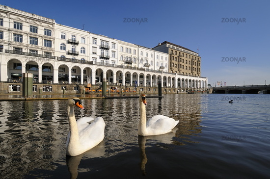 Hamburg, Germany, Alster Arcades with Swans