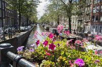 Blumen auf einer Brücke in amsterdam