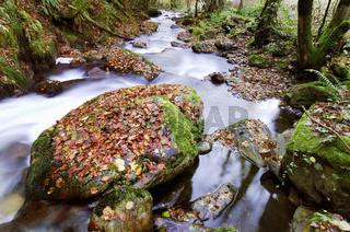 wild mountain river