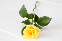Yellow rose on white wooden background