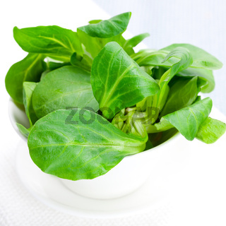 frischer Feldsalat / lambs lettuce