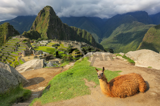 Llama resting at Machu Picchu overlook in Peru