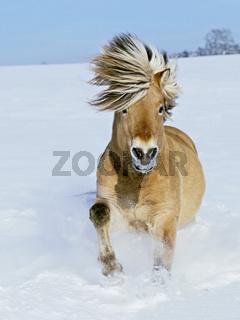 Norweger im Winter