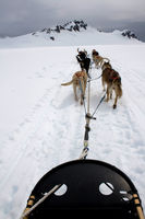 View from Sled Pulled by Dogs on Snow