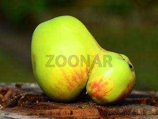 Apfel, Malus domestica, apple, Glockenapfel, Mutation