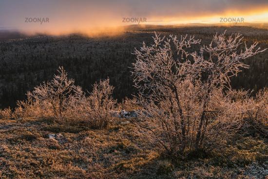 Evening mood, Lapland, Sweden