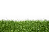Natural spring grass