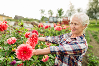 senior woman with flowers at summer garden