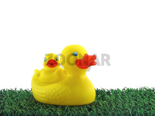 Yellow ducks on green grass