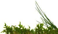 moss_grass_right