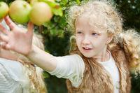Blondes Mädchen pflückt einen Apfel