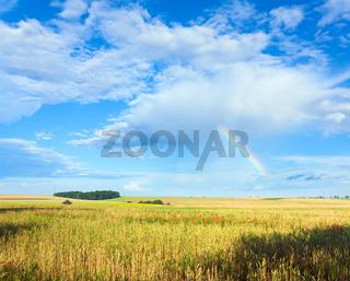 Rainbow and summer meadow.