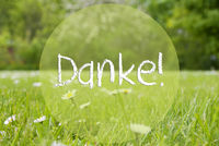 Gras Meadow, Daisy Flowers, Text Danke Means Thank You