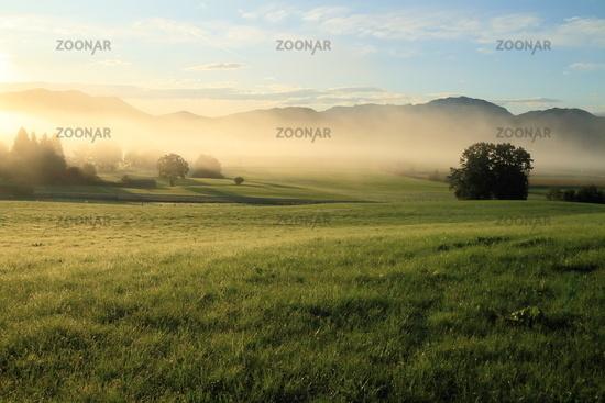 natural landscape at morning