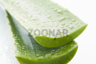 Cut aloe versa leaves with water draps as closeup on withe background