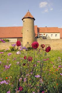 Blumen an der Stadtmauer in Mainbernheim