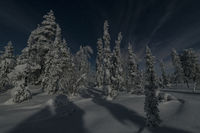 Moonlit winter landscape, Muddus National park, Lapland, Sweden