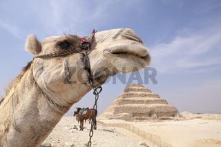 Stufenpyramide Sakkara des Pharao Djoser