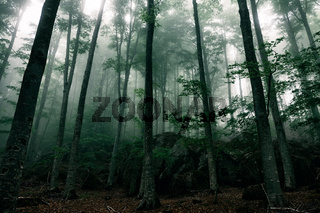 Mysterious house in the forest with fog