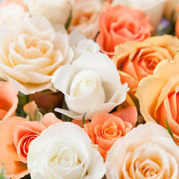 White and peach colored roses