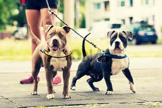 Hunde in der Stadt