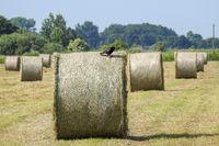 Hay harvest in Germany