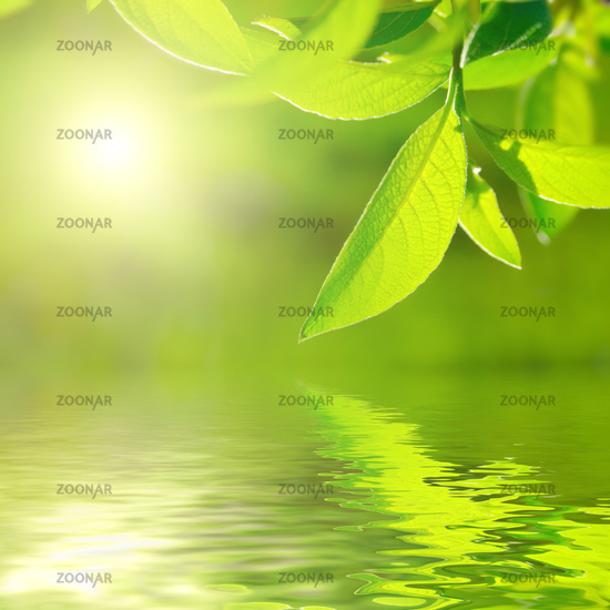 Fresh green leaf highlighted by sun on water.