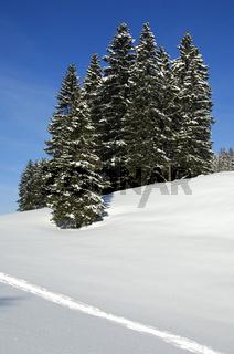 Winterlandschaft mit verschneitem Fichtenwald