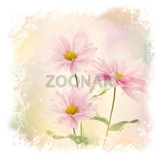Pink Daisy Flowers watercolor