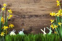 Easter Decoration, Gras, Copy Space