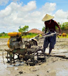 Rice field worker. Bali, Indonesia