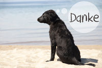Dog At Sandy Beach, Danke Means Thank You