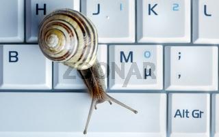 Close up of a snail on a laptop