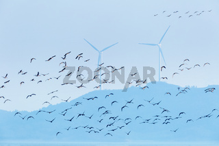 migratory birds and wind farm background