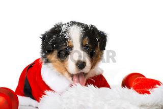 Weihnachtswelpe