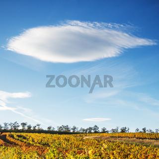 Wolke über den Weinbergen