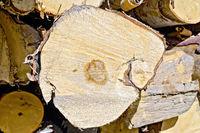 End of birch logs