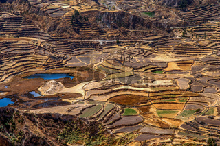 Terrace fields in the Canyon Colca