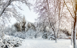 First snow in the city park with trees trees under fresh snow at sunrise