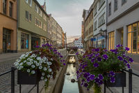 Wittenberger Flower Road