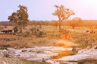 landscape at Kruger NP, South Africa