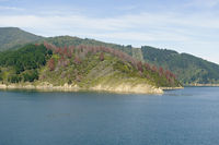 Queen Charlotte Sound, New Zealand