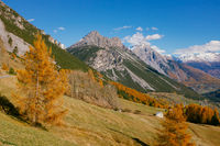 Beautiful colored larches with autumn colors in the mountains.