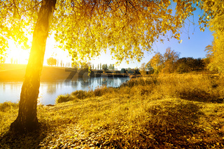 Colorful autumn on river