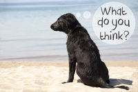 Dog At Sandy Beach, Text What Do You Think