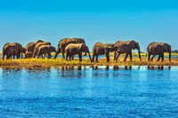 Large herd of elephants with calves