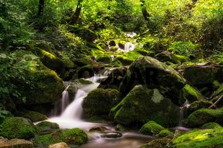lush mossy creek