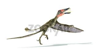 Dorygnathus flying Dinosaur photorealistic representation, take off view.